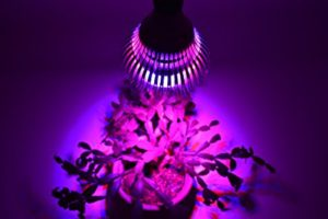 Awesome Benefits of Led grow lights-Do you Know?