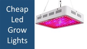 Top 5 cheap led grow lights from reputable manufacturers