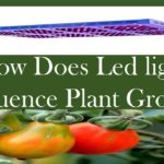 How Does Led Light Influence Plant Growth ?
