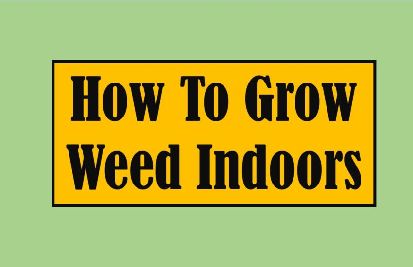 how to grow weed indoors