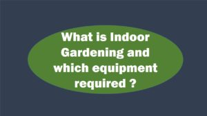 Know Details About Indoor Gardening