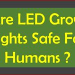 Are LED Grow Lights Safe For Humans?-What Do You think ?