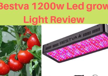 BESTVA 2000W LED Grow Light Review For Indoor Gardener