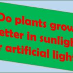 Do plants grow better in sunlight or artificial light?