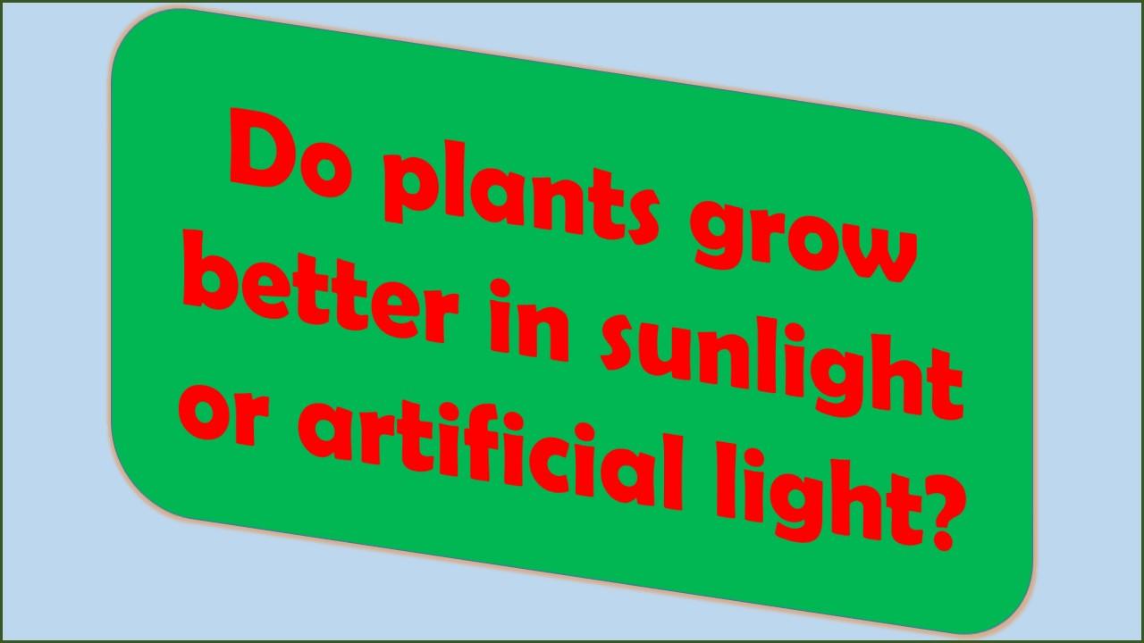 sunlight or artificial