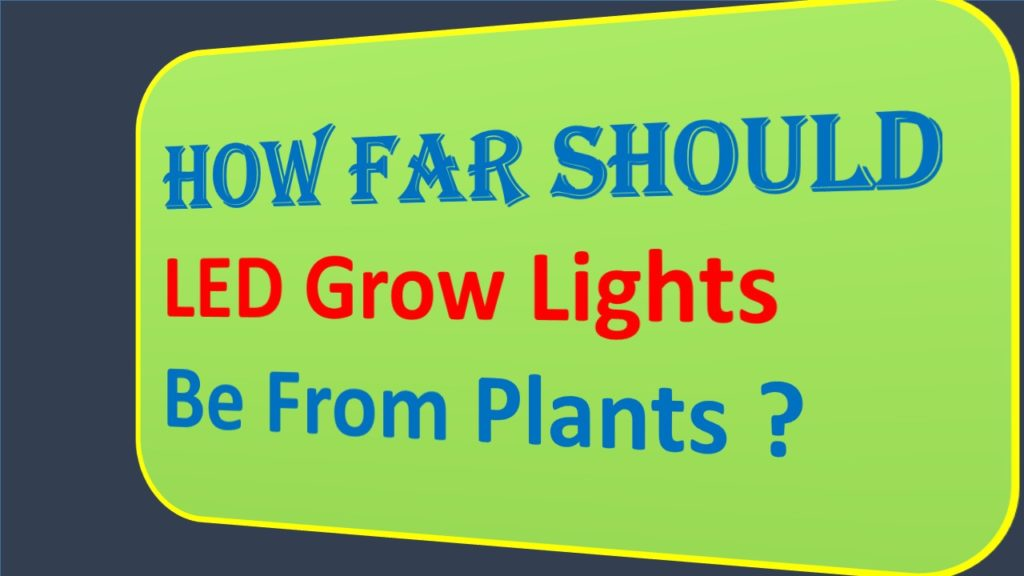 How Far Should LED Grow Lights Be From Plants
