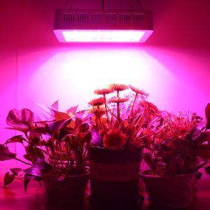 Morsen 1200W LED Review For Your Indoor Garden(Updated 2019)