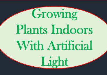 Growing Plants Indoors With Artificial Light-Every Gardener Should know