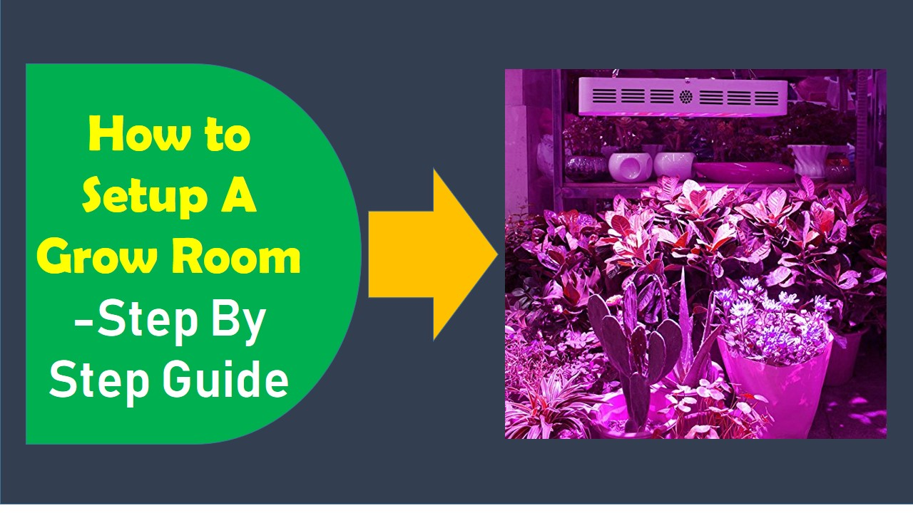 How to Set Up a Grow Room -Step By Step Guide