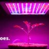 Best Led Grow Light for Tomatoes.