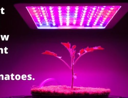 Best Led Grow Light For Tomatoes in 2019 (very Useful)