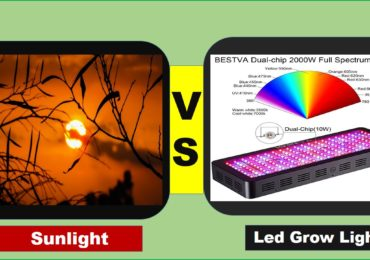 LED Grow Lights Vs Sunlight – Which is Better?