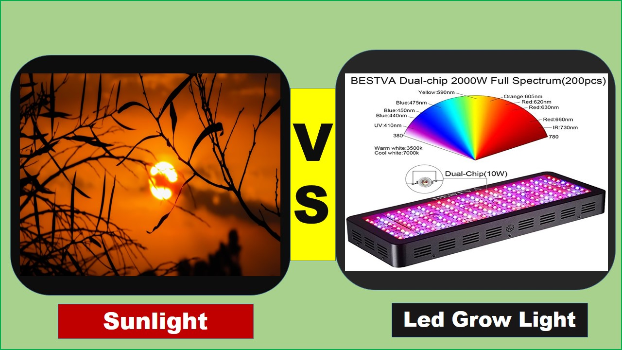 led grow light vs sunlight