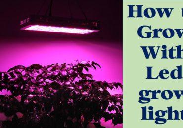 How to Grow With LED Grow Lights