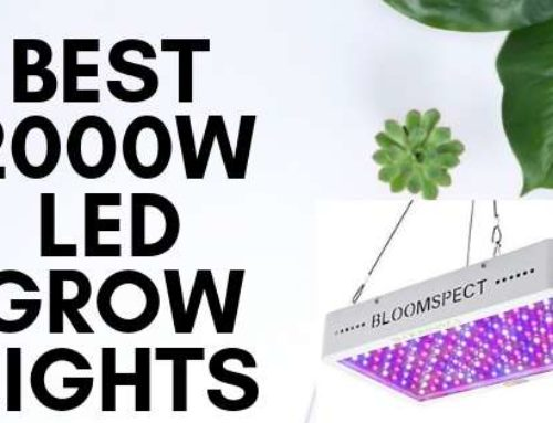 Most Popular 5 Best 2000w Led Grow Lights For Indoor plants