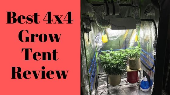 Best 4x4 Grow Tent Review