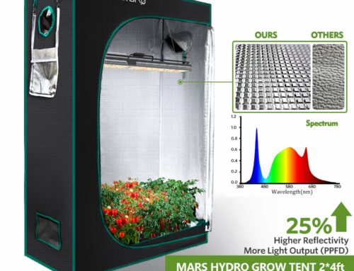 Best 2X4 Grow Tent For Indoor Plants You should Never Miss !